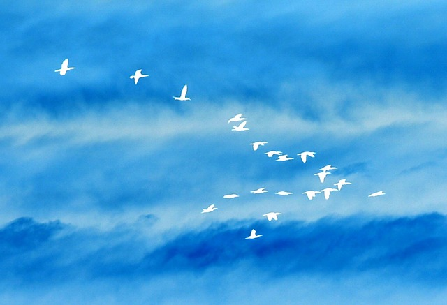 birds-707348_640